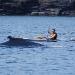 humpback-whales-033